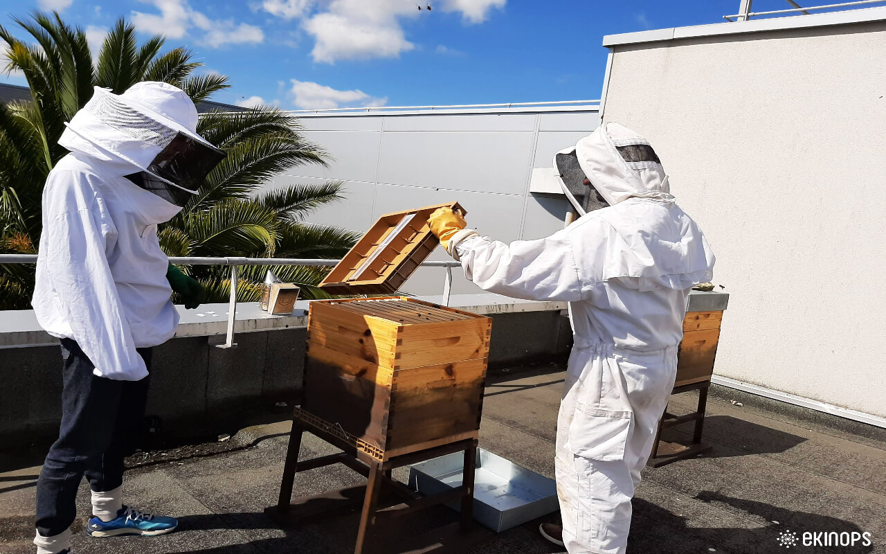 Ekibees: Ekinops turns its rooftop into a refuge for bees